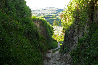 Hollow way with view of Oberrotweil