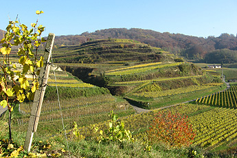 Wine cultivation on smaller terraces