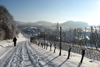 Winter at the Kaiserstuhl hills