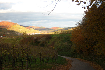 Kaiserstuhl in November - a festival of colours